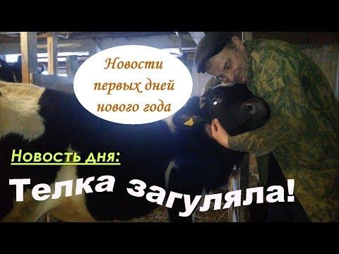 Девки загуляли//Первая охота у телки//Проблемы с ногой