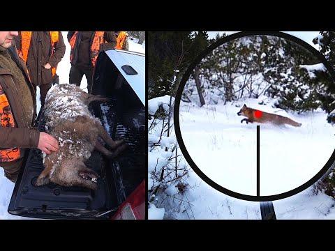 Охота #263 лиса, заяц, облава на волков