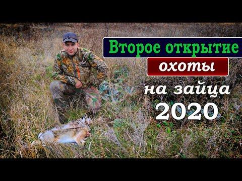 Второе открытие охоты на зайца 2020