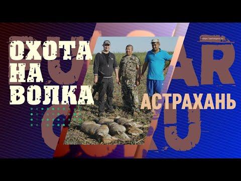 Волки сожрали 30 телят. Астраханская охота на волка, самые дальние выстрелы, попадание в кадре.