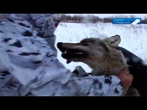 ШИКАРНАЯ ОХОТА НА ВОЛКА! САМЫЕ МЕТКИЕ СТРЕЛКИ! Охота с Леонидом Костюковым