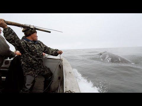 Охота на кита: как чукчи добывают еду в море? Эксклюзивные кадры телеканала «МИР»