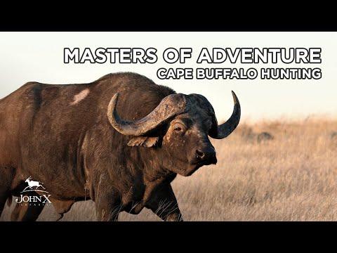 Masters of Adventure   Cape Buffalo Hunting   John X Safaris