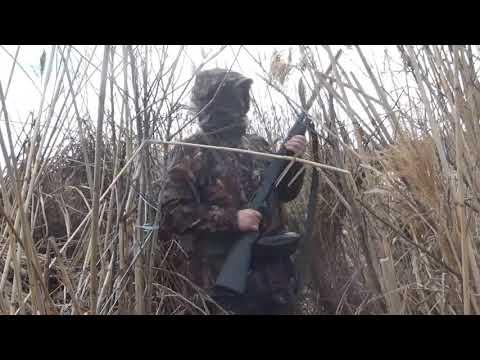 Охота на утку 2018