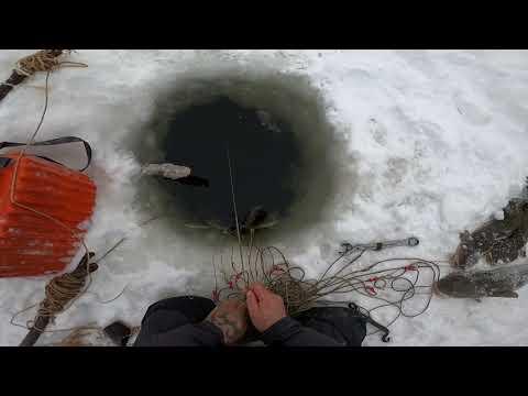 Отчёт с Рыбалки 20.11.2020 (24)