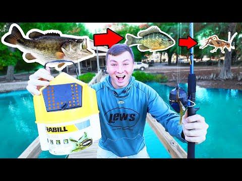 Food Chain Fishing Challenge (BIG FISH!)