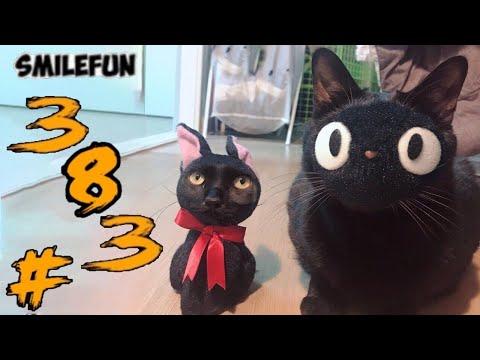 СМЕШНЫЕ КОШКИ 2020 КОТЫ Приколы Кошками и Котами Funny Cats