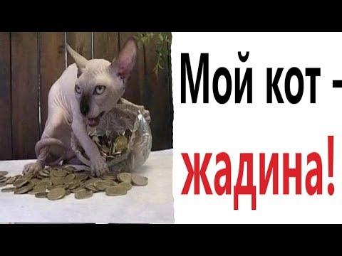 Лютые приколы. МОЙ КОТ ЖАДИНА!!! Попробуй не засмеяться! Самое смешное видео! – Domi Show!