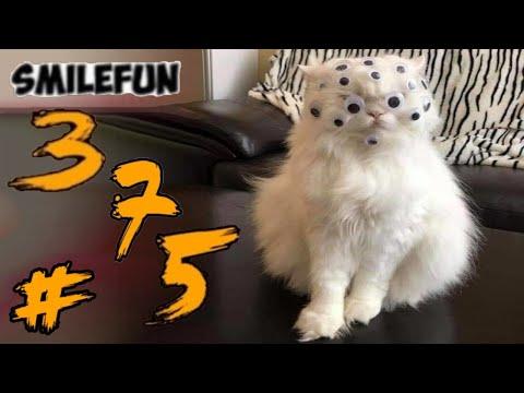 СМЕШНЫЕ КОТЫ 2020 КОШКИ Приколы С Кошками и Котами Funny Cats