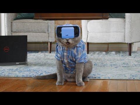 Cat Tries VR