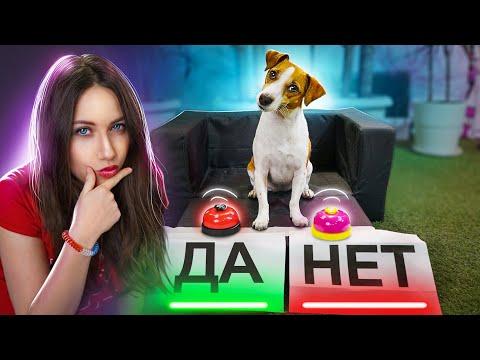 СОБАКА ОТВЕЧАЕТ ДА или НЕТ - Тест для Собаки   Elli Di Pets