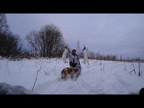 Охота на Зайцев с гончей,Собака чуть с ума не сошла от столько зайцев!))