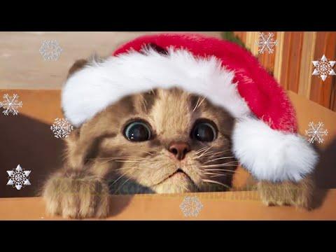 Little Kitten My Favorite Cat - Play with cute little kitten - Educational game for kids