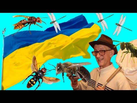 Частные и Научные Коллекции Насекомых? Зачем Собирать? Collect Insects from Arctics to Tropics!