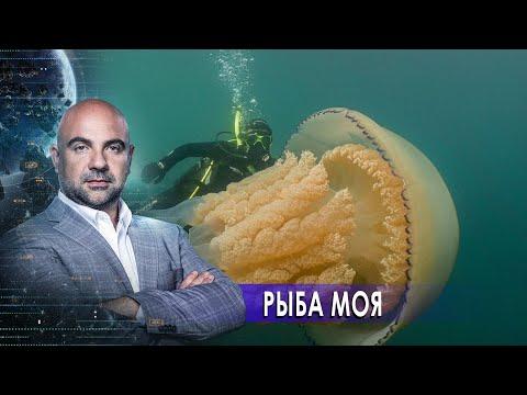"""Рыба моя. «Как устроен мир"""" с Тимофеем Баженовым (02.12.20)."""