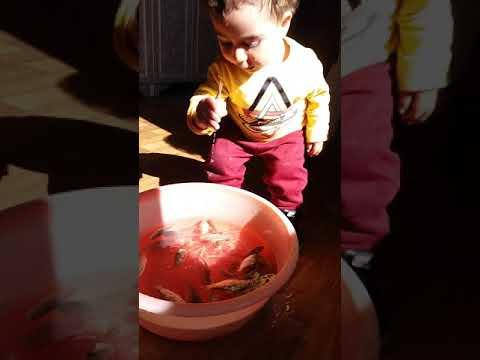 как поймать рыбу руками / ինչպես ձուկ բռնել ձեռքերով / how to catch fish with your hands