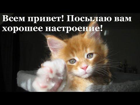 Юмор.Веселая открытка для настроения.Да,я кот...