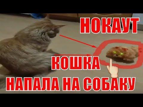 КОШКА НАПАЛА НА ВОЛКОДАВА НОКАУТ С ПЕРВОГО УДАРА THE CAT ATTACKED THE WOLFHOUND KNOCKOUT