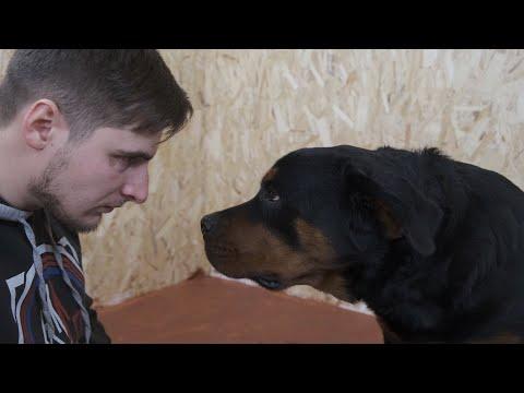 Не слушается собака? Бейте её! Как наказывать собаку за не послушание?