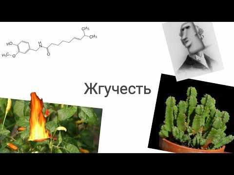 """Научное шоу серия """"Жгучесть"""""""