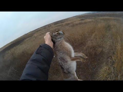 Охота с пневматикой на зайца