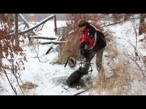 Охота на бобра капканами зимой. Бобр - профессор!