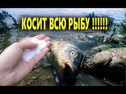 ОДИН КОМПОНЕНТ КОСИТ ВСЮ РЫБУ!