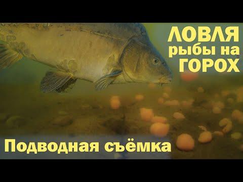 ЛОВЛЯ рыбы на ГОРОХ Подводная съёмка