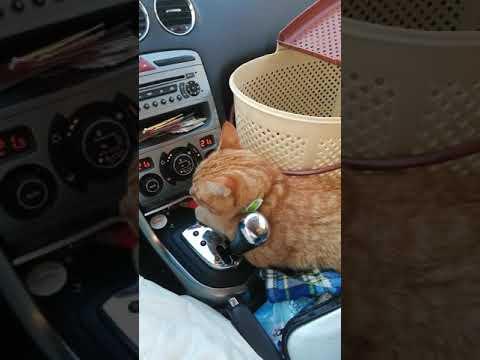 У кота командировка