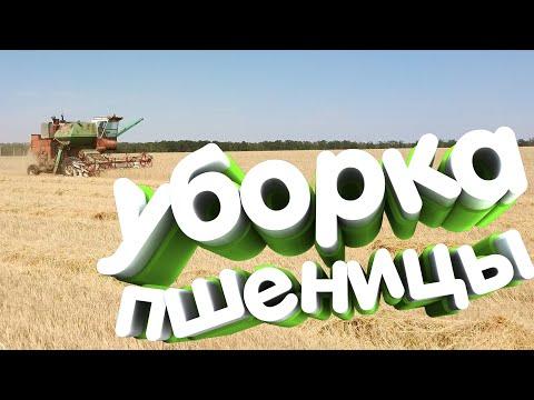 НИВА СК-5 убирает пшеницу за 30 ц/г, уборочная 2020(безпарье) день1