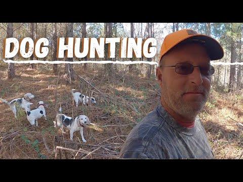 Dog Hunting In Alabama
