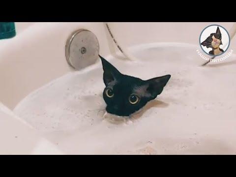 Прикольные котики и кошки