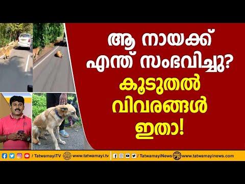 ആ നായക്ക് എന്ത് സംഭവിച്ചു? കൂടുതൽ വിവരങ്ങൾ ഇതാ! | Cruelty against Dog in Kerala