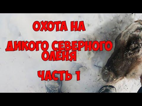 Охота на дикого северного оленя / МИРНИНСКИЙ УЛУС РС(Я)