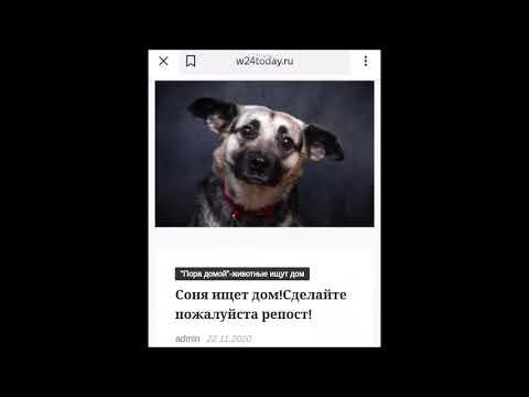 """Новостной портал """"Мир Сегодня"""" w24today.ru просит поддержать раздел:""""Пора домой""""-животные ищут дом"""