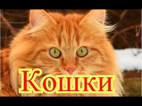 Улыбнитесь. Кошки. Создай себе хорошее настроение