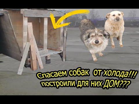 Спасли собаку от ХОЛОДА. Построили БУДКУ для собаки