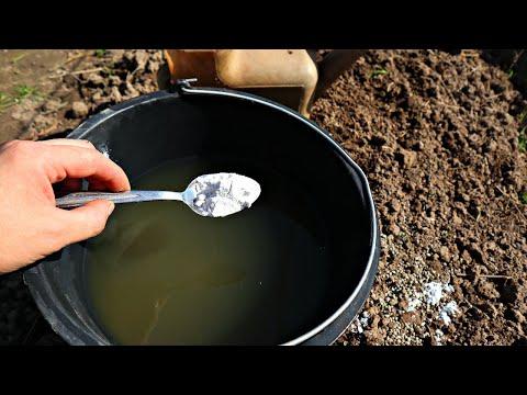 Не химия! Вношу каждый год! Урожай собираю тоннами! Доломитовая мука применение на огороде и в саду!