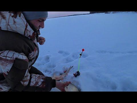 КРУПНЫЕ ЯЗИ И НАЛИМЫ НА КОМБАЙНЫ!! Окунь в коряжнике на балансир!Рыбалка на Оби, первый лед.