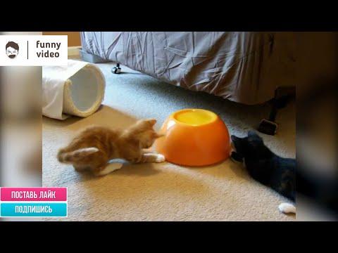 Самые смешные коты и кошки. Funny Video 06/2020