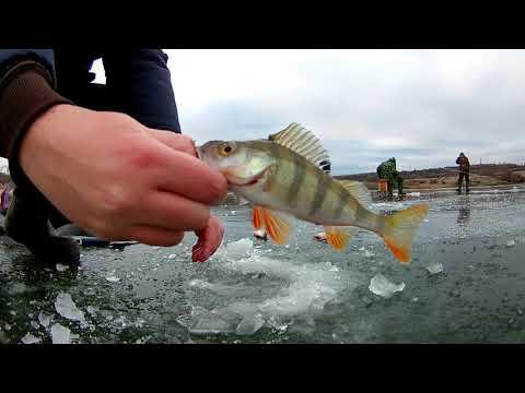 Зимняя рыбалка / Первый и опасный лёд! Жор окуня на мормышку