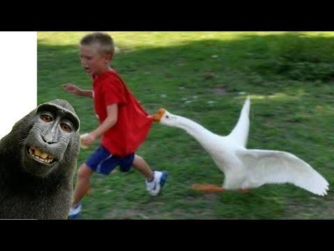 Смешные Животные Приколы Животные Смешные СМЕЕШНЫЕ ПРИКОЛЫ Приколы с Животными | 2020-12-20 20:02:31 | ахтарский финал 3ed7