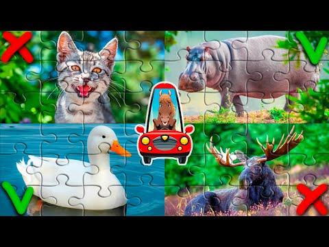 Пазлы животные для детей. Обучающее видео для малышей | 2020-12-20 20:02:33 | бездуховный слепун 7214