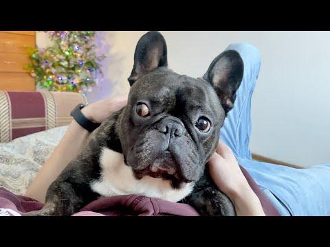 Реакция собаки на рассказ хозяина | 2020-12-20 20:03:16 | кислый опломбировывание 961c
