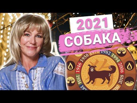 Собаки–будьте аккуратны и не доверяйте людям Астрологический прогноз на 2021 год Металлического Быка   2020-12-20 20:05:05   жухлый оконщик 30cf