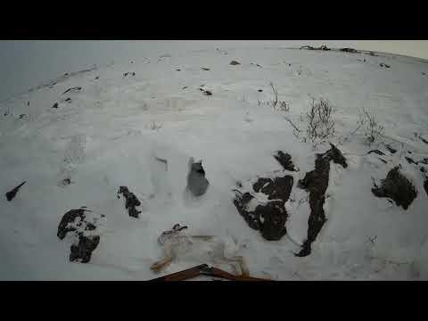 Охота на зайца  незапланированный выезд 19 12 2020 | 2020-12-21 00:33:30 | зазорный карниз 8eb9