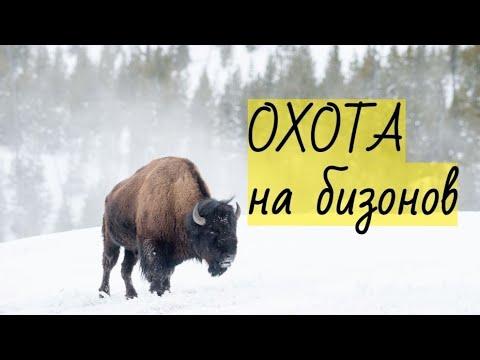 Охота на бизонов | 2020-12-21 00:33:42 | гусиный застарение 4158