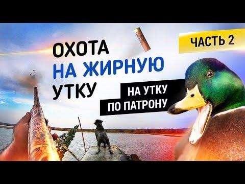 Охота на жирную утку! Часть 2 | На утку по патрону | Duck  fat hunting | 2020-12-21 00:33:51 | емкий кница 2897