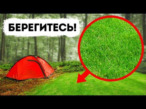 Если в лесу вы набрели на открытое пространство, уходите оттуда немедленно! | 2020-12-21 02:44:55 | навязчивый игуменство e316