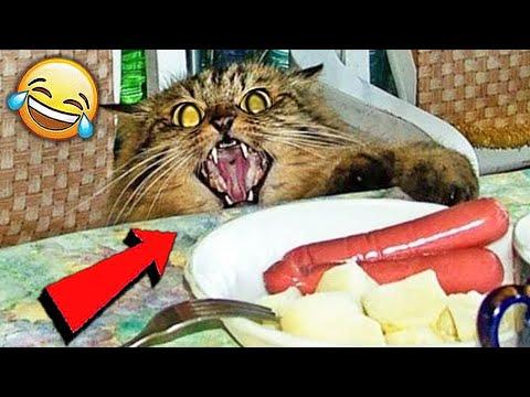СМЕШНЫЕ ЖИВОТНЫЕ 2020 / ПРИКОЛЫ КОТЫ СОБАКИ, ЛУЧШИЕ ПРИКОЛЫ с Кошками и Собаками Funny Cats   19:43:22   головастый каблук #c310